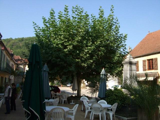 Plane tree, Daglan, France