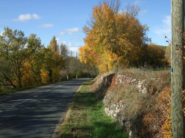 Trees along a country road near Daglan
