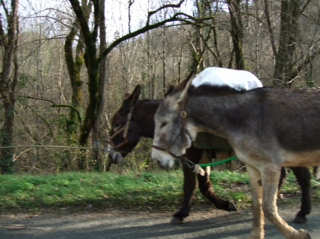 Donkeys along the road into Daglan, France