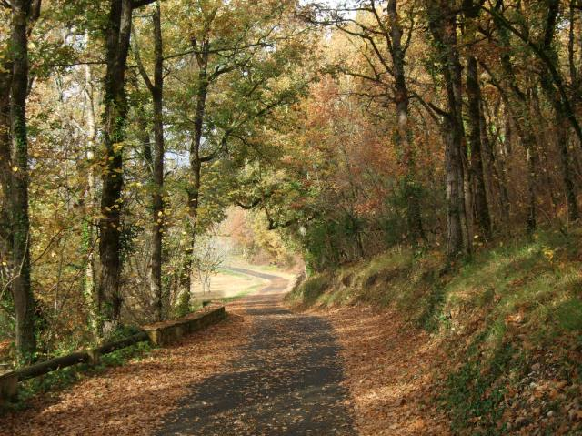 Country road, autumn, France