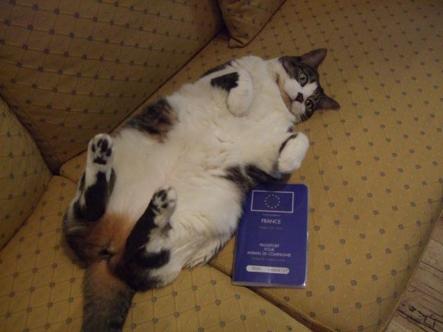 Cat on a sofa, with animal passport