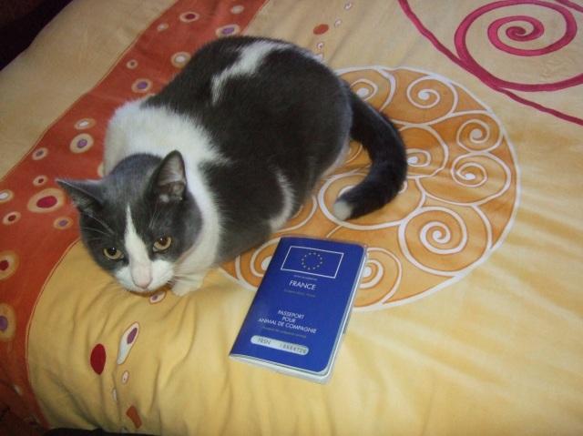 Cat with passport