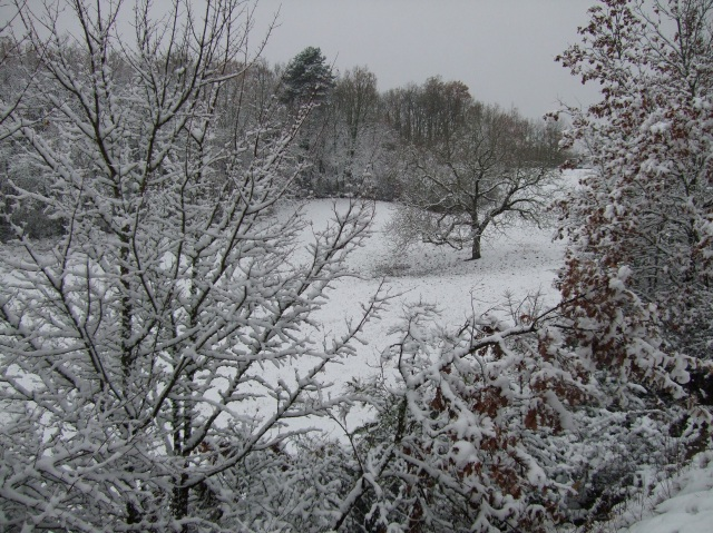 Snow-covered trees and field
