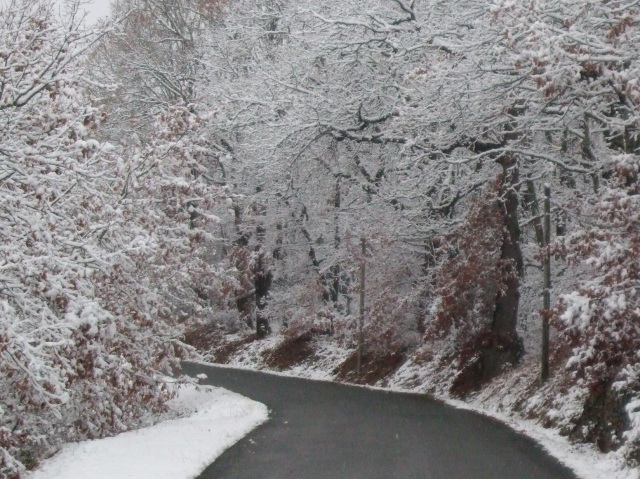 Road and snow-covered trees.