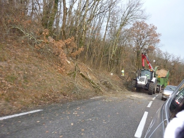 Photo of tree-cutting.