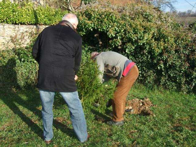 Planting a Christmas tree
