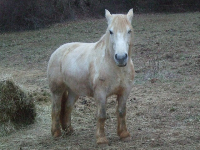 Light-coloured horse