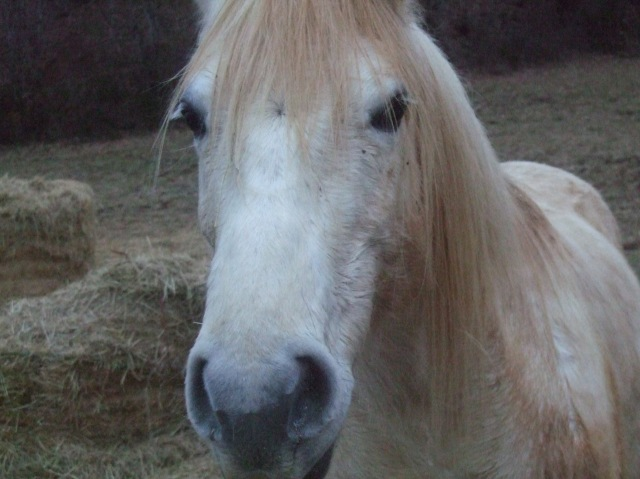 Close-up of light-coloured horse.
