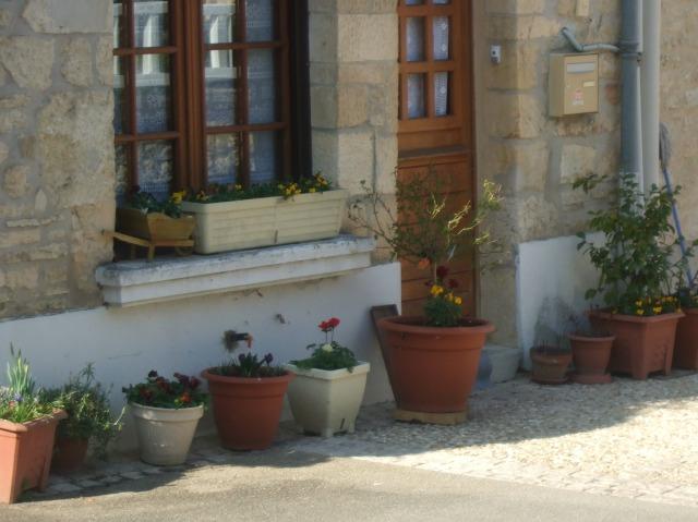 Flowers outside a house