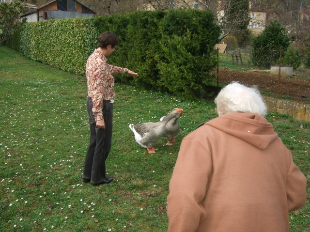 Geese retreating.