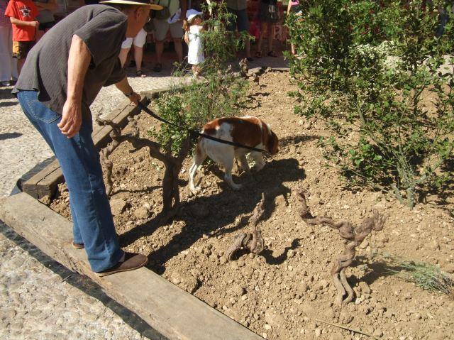 Locating a truffle