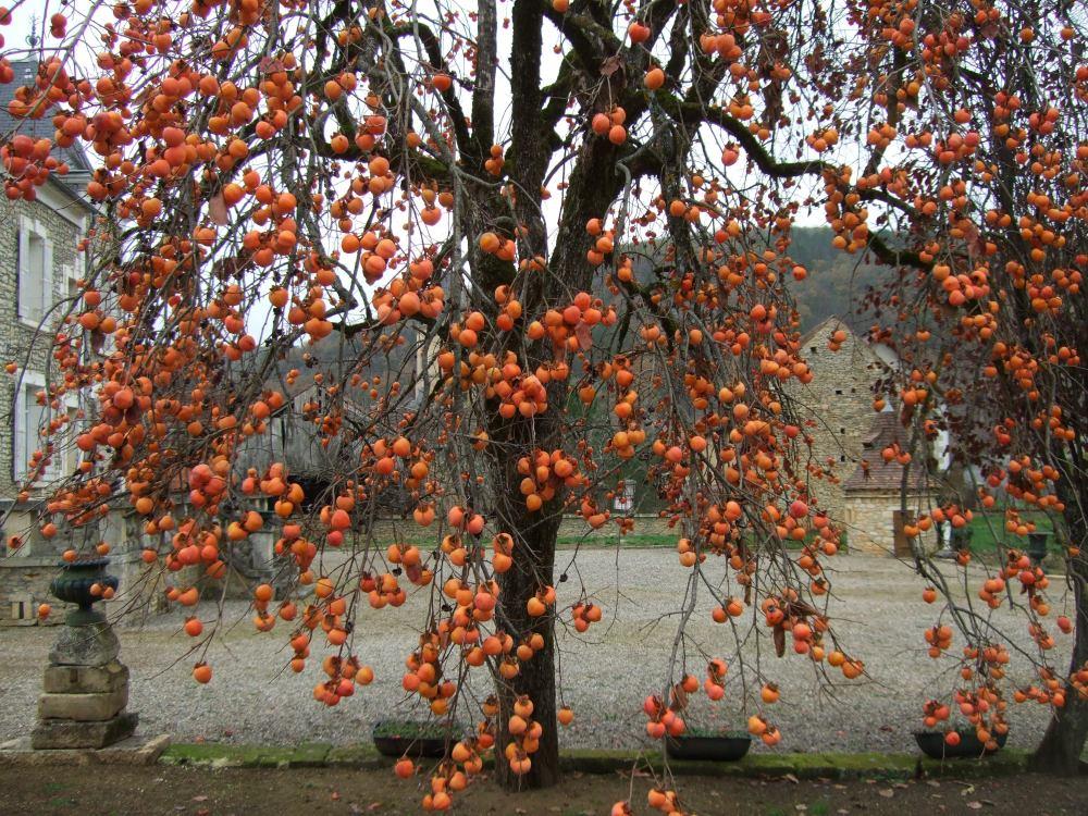 The Christmas bulb tree (2/2)