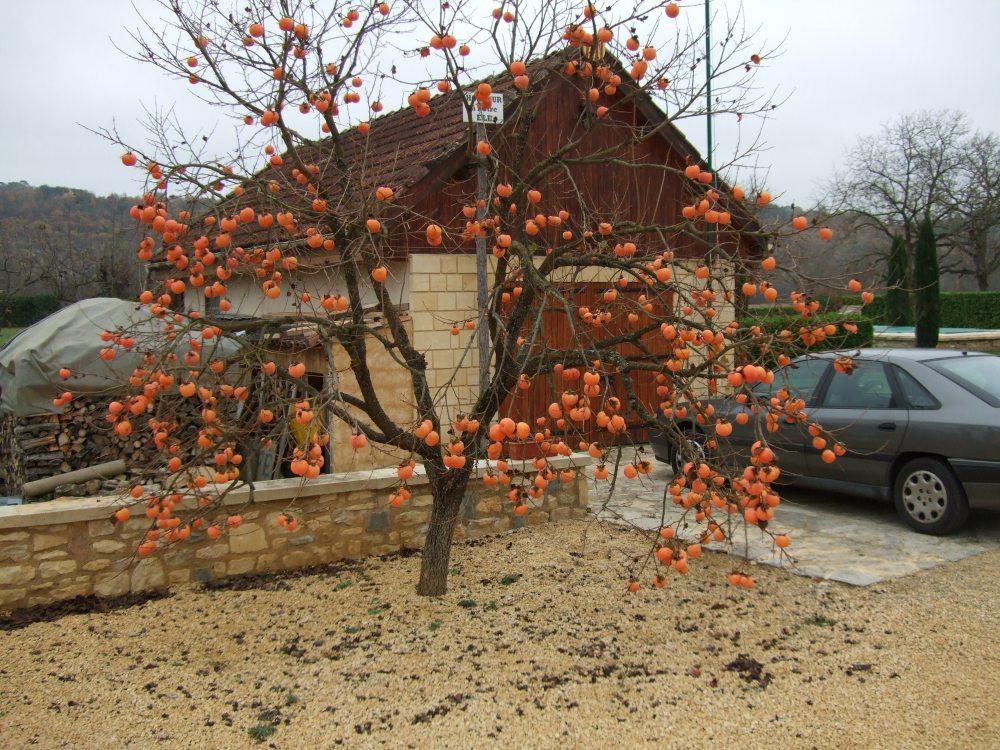 The Christmas bulb tree (1/2)