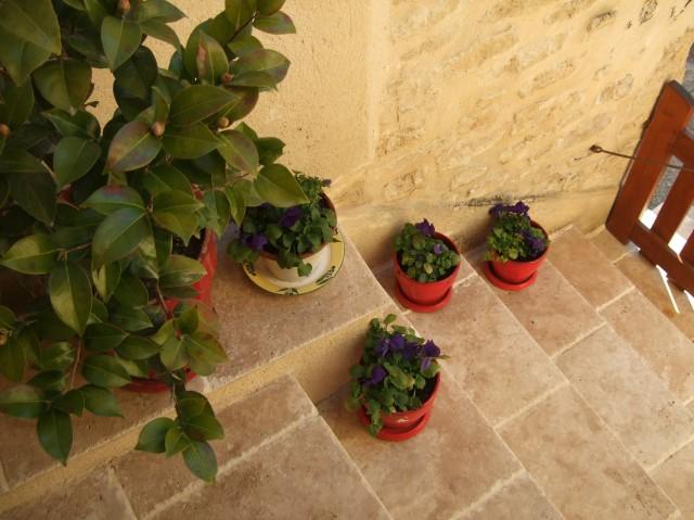 Flower pots on steps