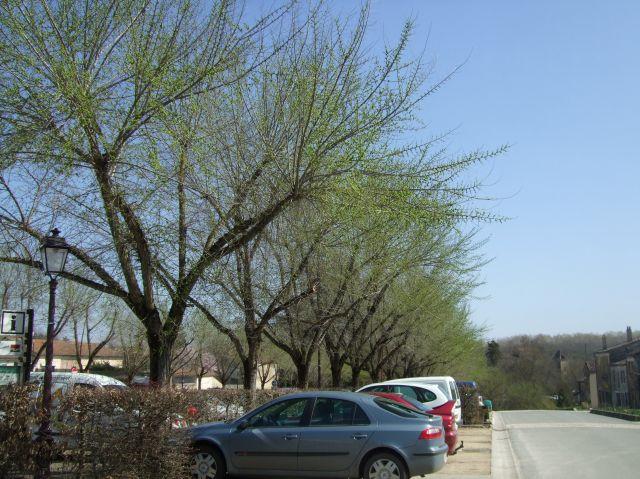 Greening treees