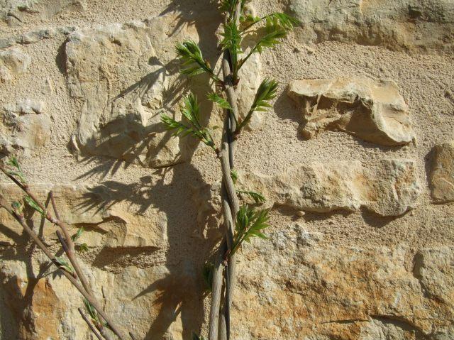 Vertical wisteria