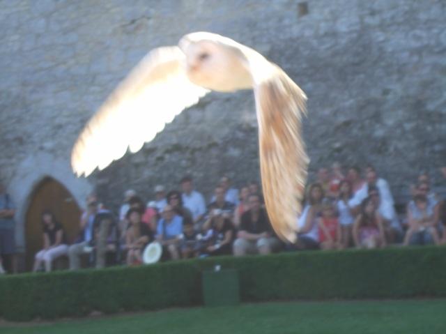 Wings down