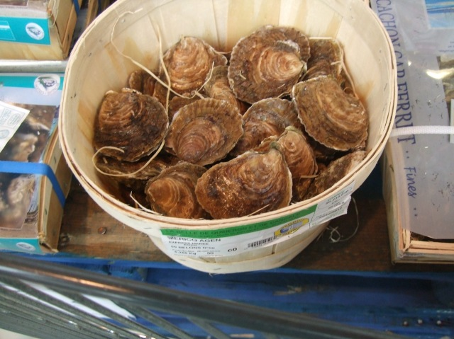 A basket of nice-looking scallops.
