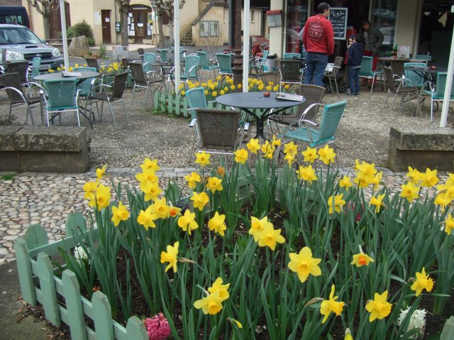A planting of daffodils in front of the café in Castelnaud.