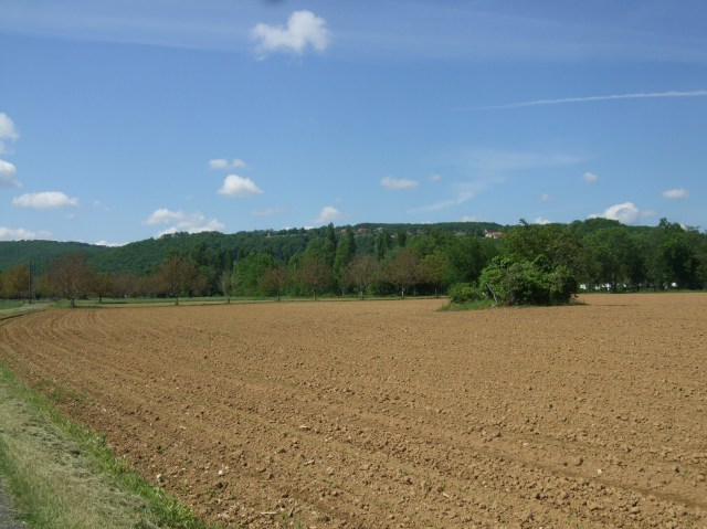 A field has just been planted with corn, which has started to sprout.