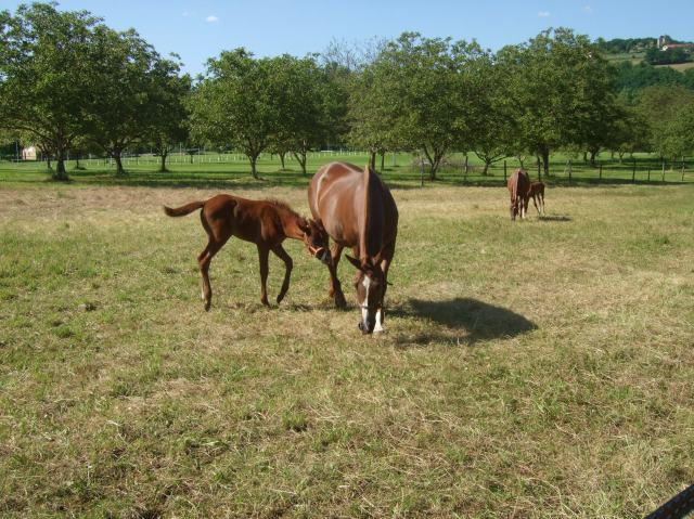 In the field: Two mares, two foals
