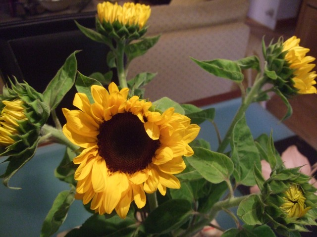 Sunflowers add some life to the dining table.