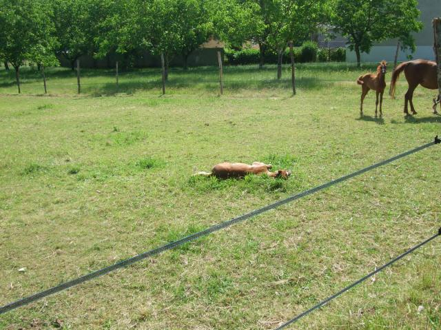 It's a bit spooky, seeing one of the foals lying like this.