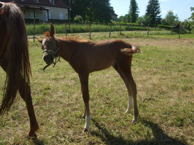 Our colt is looking just a bit cranky at this point.