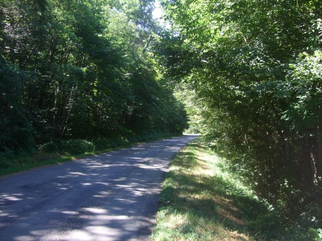 The shaded road winds its way up the hill.