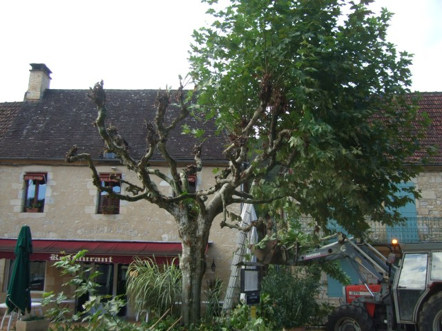 The half-pruned plane tree.
