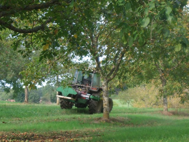 The tractor is getting into position near a walnut tree.