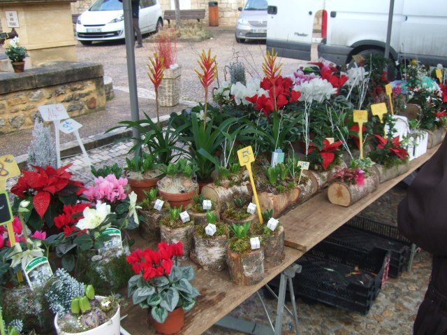 A nice selection of flowers for Christmas.