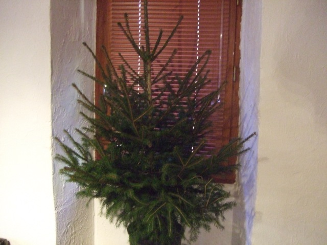 Christmas tree, undecorated so far.