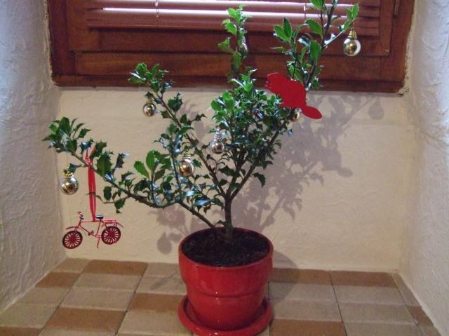 Our Christmas 2012 holly bush.