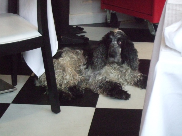 A dog appears in the restaurant.