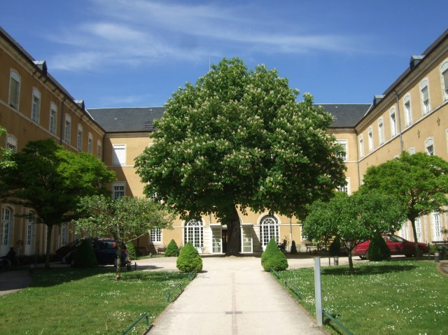 A majestic tree stands in front of the Acceuil, or Reception.