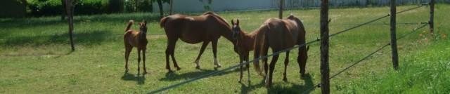cropped-1-horses.jpg