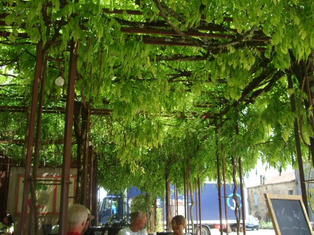 A canopy of vines shades the patio.