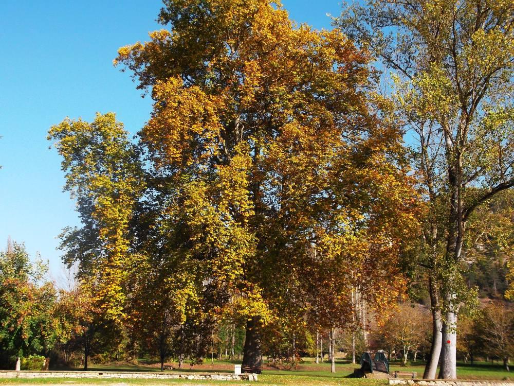 Glimpses of autumn (3/6)