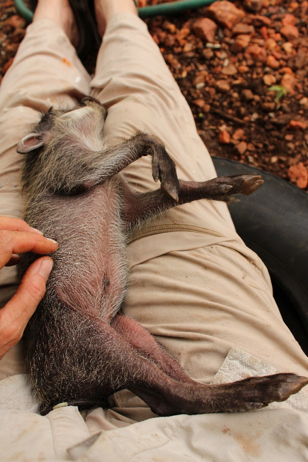 Stella enjoys some gentle tummy-rubbing.