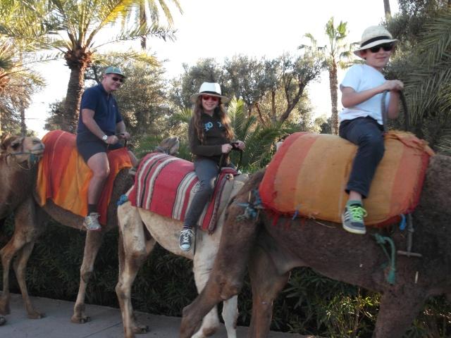 Parents and kids enjoying a camel ride.