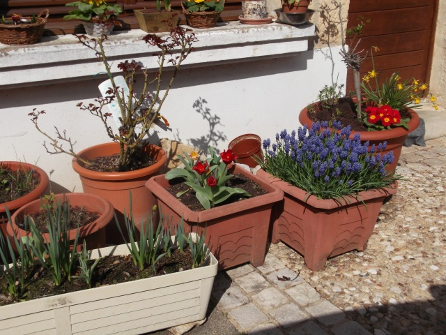 A growing collection of flower pots.
