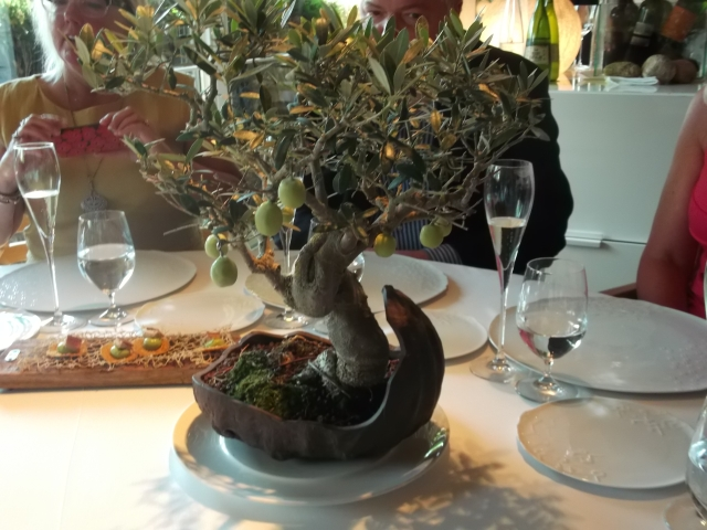 A miniature olive tree at our table.