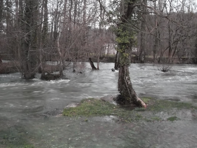 The river really isn't supposed to be surrounding these trees.