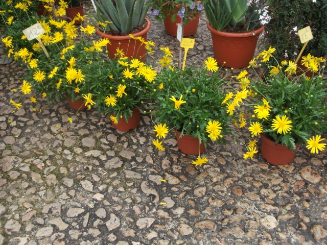 A row of bright yellow beauties.
