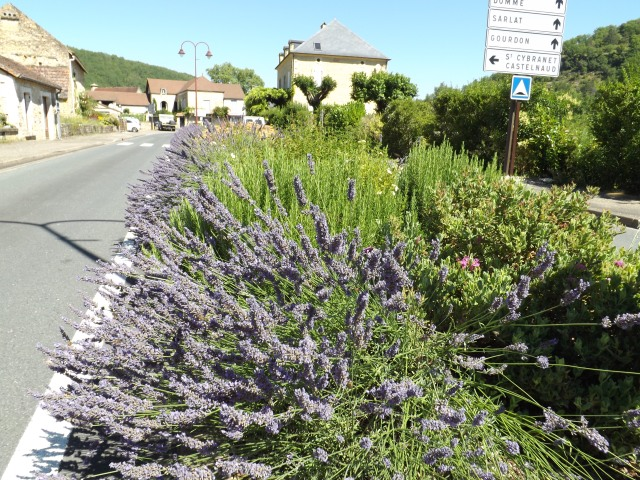 Stretches of lavender are just part of this long row of flowers.