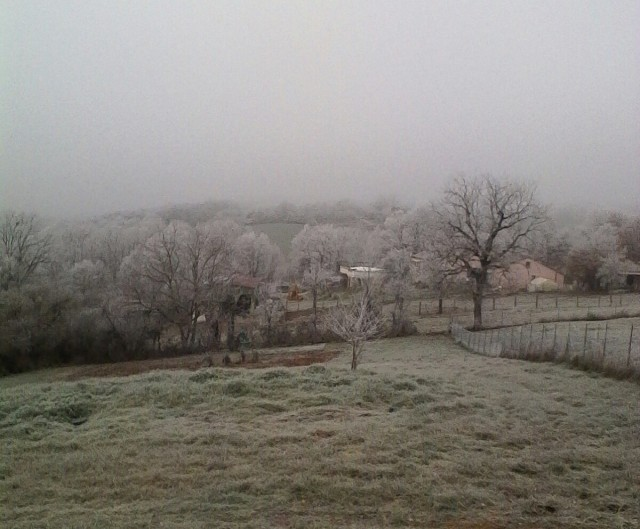The tree branches are covered in frost.