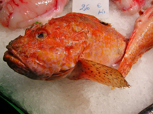 Image result for what is the rascasse fish?